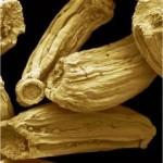 Лайка тънколистна - Matricaria chamomilla - семена