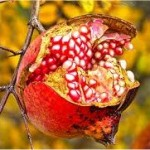 Нар плод - Punica Granatum L.