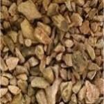 Random image: Ревен - Rheum officinale-семена