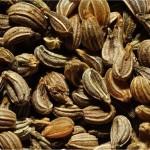 Магданоз - Petroselinum crispum - семена